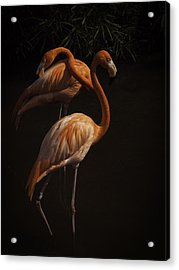 Flamingo Delight Acrylic Print by Rob Wilson