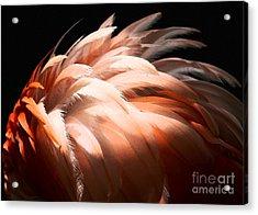 Flamingo Feathers Acrylic Print by Sabrina L Ryan