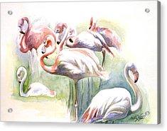 Flamingo Fiesta Acrylic Print