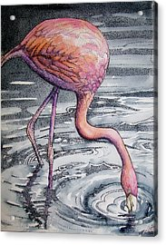 Flamingo Fishing  II Acrylic Print by Martha Ayotte