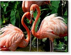 Flamingo Heart Acrylic Print