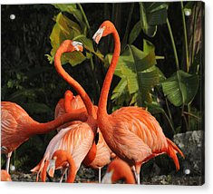 Flamingo Heart Acrylic Print by Keith Lovejoy