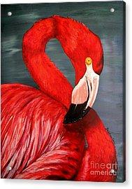 Flamingo Acrylic Print by JoAnn Wheeler