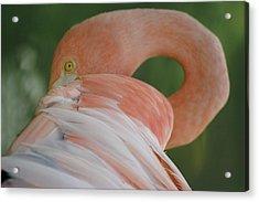 Flamingo Acrylic Print by Melanie Beasley
