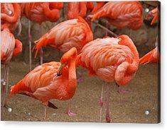 Flamingo Party Acrylic Print by Teresa Blanton