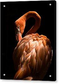 Flamingo Acrylic Print by Patrick  Flynn