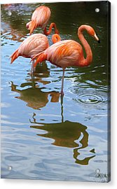 Acrylic Print featuring the photograph Flamingo Reflections by Margaret Bobb