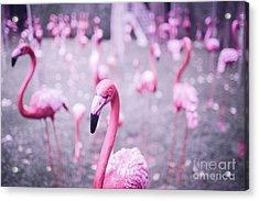 Acrylic Print featuring the photograph Flamingo by Setsiri Silapasuwanchai