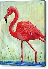 Flamingo Acrylic Print by Timothy Hacker