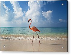 Flamingo Walking Along Beach Acrylic Print