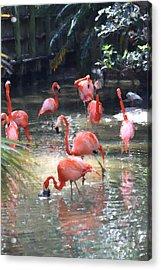 Flamingos Acrylic Print by Diane Merkle