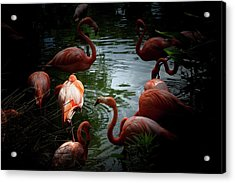 Acrylic Print featuring the photograph Flamingos by Eric Christopher Jackson