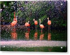 Flamingos II Acrylic Print by Susanne Van Hulst