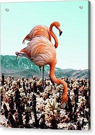 Flamingos In The Desert Acrylic Print by Uma Gokhale