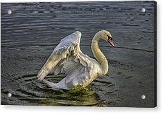Flap Those Wings Acrylic Print by Martin Newman