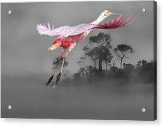 Flash Of Pink Acrylic Print
