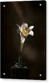 Flashlight Series Easter Lily 1 Acrylic Print