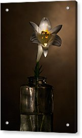 Flashlight Series Easter Lily 2 Acrylic Print