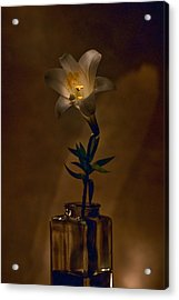 Flashlight Series Easter Lily 4 Acrylic Print