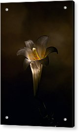 Flashlight Series Easter Lily 5 Acrylic Print