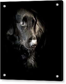 Flat Coated Retriever Acrylic Print