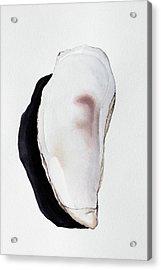 Flat Oyster Shell Acrylic Print by Jennifer Kassing-Bradley