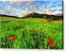 Flatiron Poppies Acrylic Print