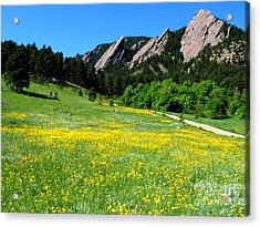 Flatirons And Yellow Meadow Acrylic Print