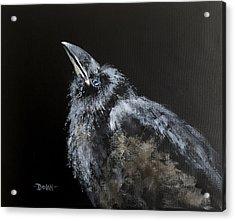 Fledgling Raven Acrylic Print