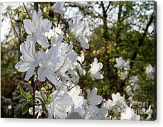 Acrylic Print featuring the photograph Fleeting Beauty by Chris Scroggins