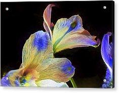Fleeting Flowers Acrylic Print