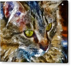 Fletcher Kitty Acrylic Print