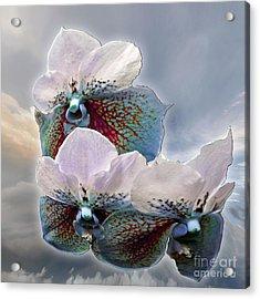 Fleur De Celeste Acrylic Print