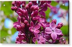 Fleur De Lilac Acrylic Print by Charlotte Gray