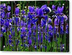 Fleur De Lys Acrylic Print by Elfriede Fulda