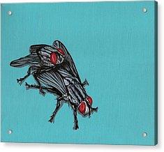 Flies Acrylic Print by Jude Labuszewski
