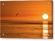 Flight At Sunset Acrylic Print by Christopher Holmes