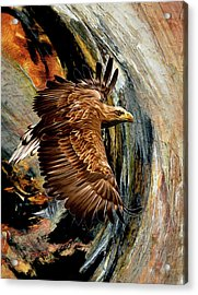 Flight For Freedom  Acrylic Print