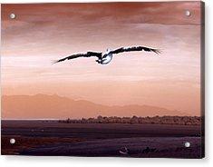 Flight Acrylic Print by Holly Kempe