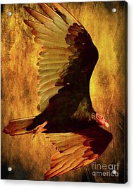 Flight Of A Vulture . Texture . 40d8879 Acrylic Print by Wingsdomain Art and Photography