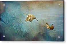 Flight Of Fantasy, Sandhill Cranes Acrylic Print