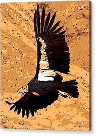 Flight Of The Condor Acrylic Print by George Pedro
