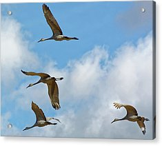 Flight Of The Cranes Acrylic Print