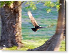 Acrylic Print featuring the photograph Flight Of The Heart by Teresa Blanton