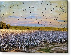 Acrylic Print featuring the photograph Flight Over The Cotton by Jan Amiss Photography