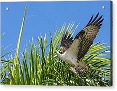 Flight Through The Palms Acrylic Print