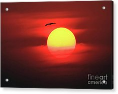 Flight To The Sun Acrylic Print