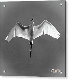 Acrylic Print featuring the photograph Flight by William Havle