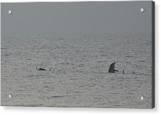 Flipper Acrylic Print by Bill Cannon