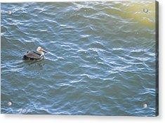 Floating Along Acrylic Print by Miranda Strapason